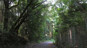 森林浴コース①
