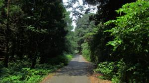 森林浴コース②