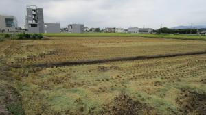 稲刈りが終わった田んぼ