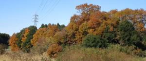 まだ葉が落ちない落葉樹