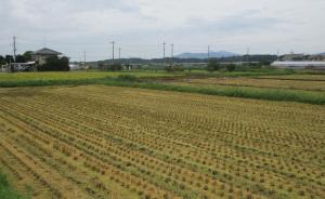 稲刈りした田んぼ
